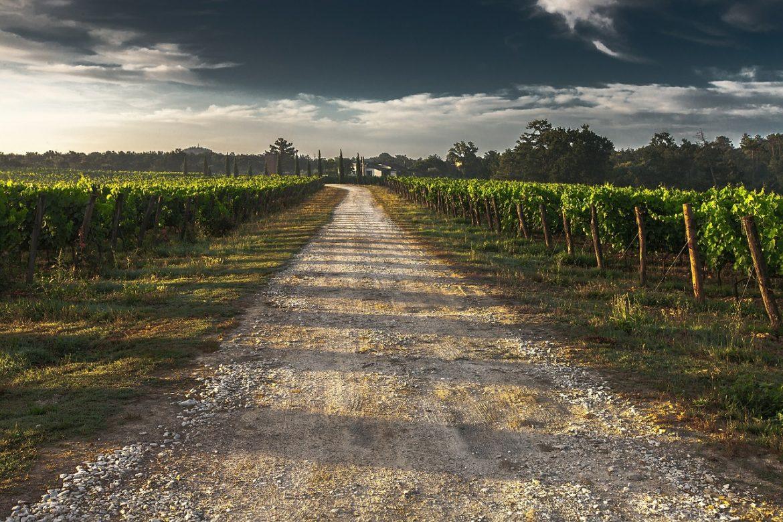 Eonotourisme : partir à l'aventure dans le monde du vin
